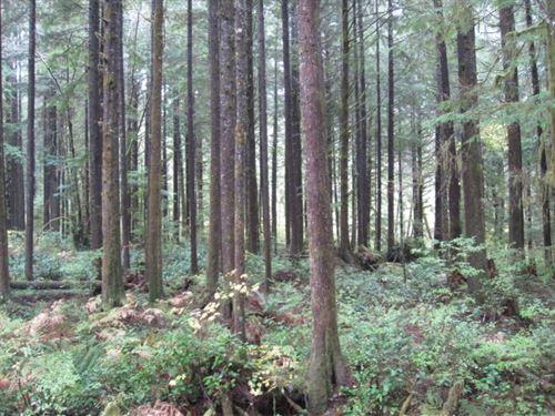 Berryman Creek Home Site : Hoquiam : Grays Harbor County : Washington