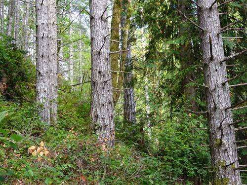Jorsted Creek : Lilliwaup : Mason County : Washington