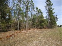 Gilchrist Land Co, P-62 &63 : Bell : Gilchrist County : Florida