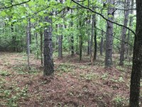189 Acres in Clay Co., AL Near Blu : Bluff Springs : Clay County : Alabama