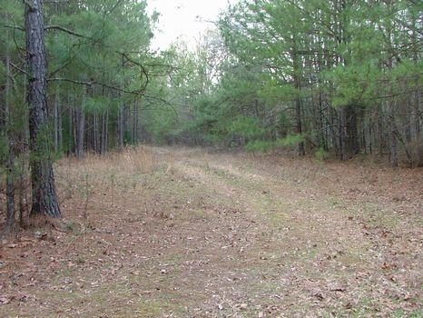 23.3 Acres Langston, Alabama : Langston : Marshall County : Alabama
