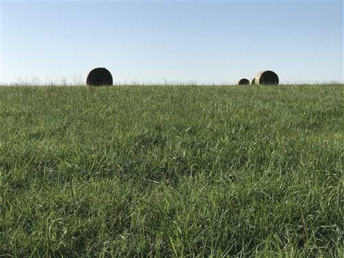240 Acre Grass Farm in Webster Cou : Conway : Webster County : Missouri