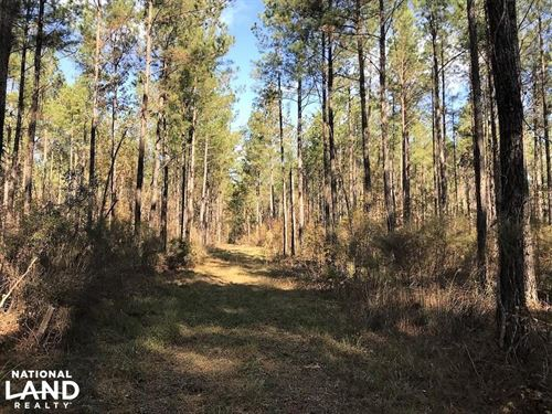 Calamus Pond Homesites : Summerville : Berkeley County : South Carolina