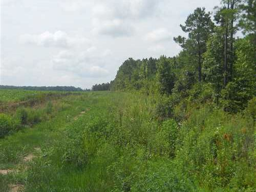 249 Acres With Crp Income And 20 : New Houlka : Pontotoc County : Mississippi