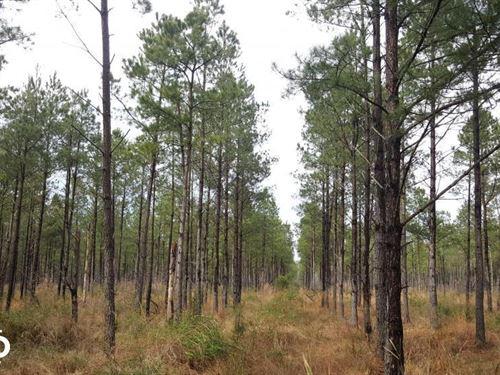 Far Side Hunting And Timber : Burgaw : Pender County : North Carolina