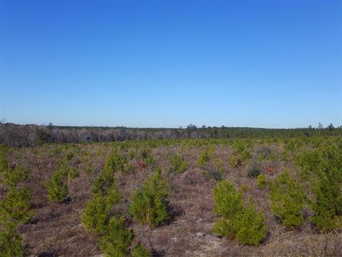 Maddox Road : Marianna : Jackson County : Florida