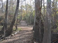433.78 Acres of Beautiful Mature : Buna : Jasper County : Texas
