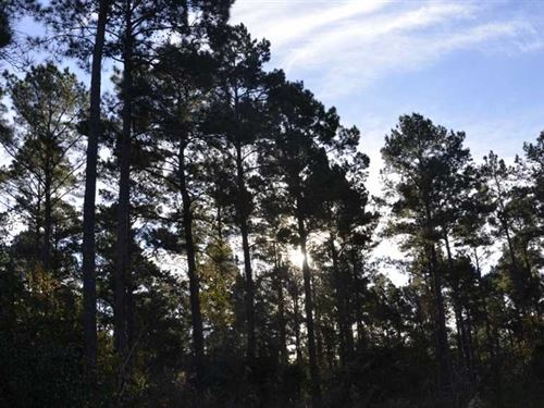 891 Acres Investment Property - Ti : Lufkin : Angelina County : Texas