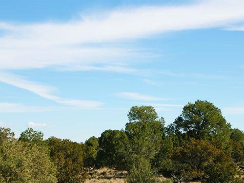 Show Low Arizona Cabin Site : Vernon : Apache County : Arizona