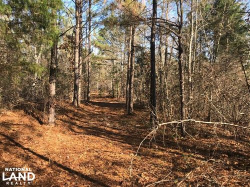 Browning Road Homesite : Ralph : Tuscaloosa County : Alabama