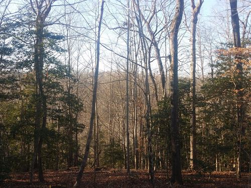 3.5Ac Beautiful Wooded Lot. Multipl : Alpine : Pickett County : Tennessee