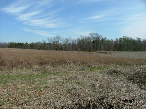 90 Acres in Pisgah, Alabama : Pisgah : Jackson County : Alabama