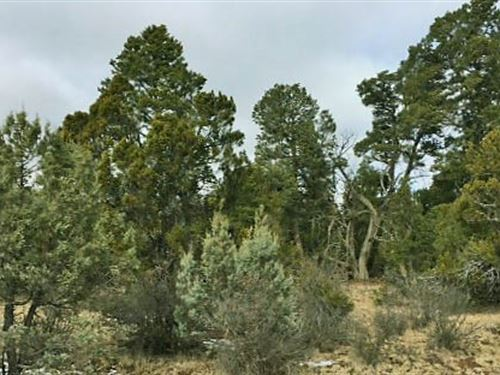 Forested Northern Arizona Homesite : Heber : Navajo County : Arizona