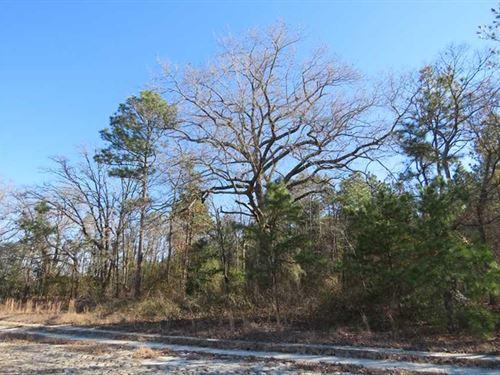 250 Acres of Farm And Hunting Land : Laurinburg : Scotland County : North Carolina