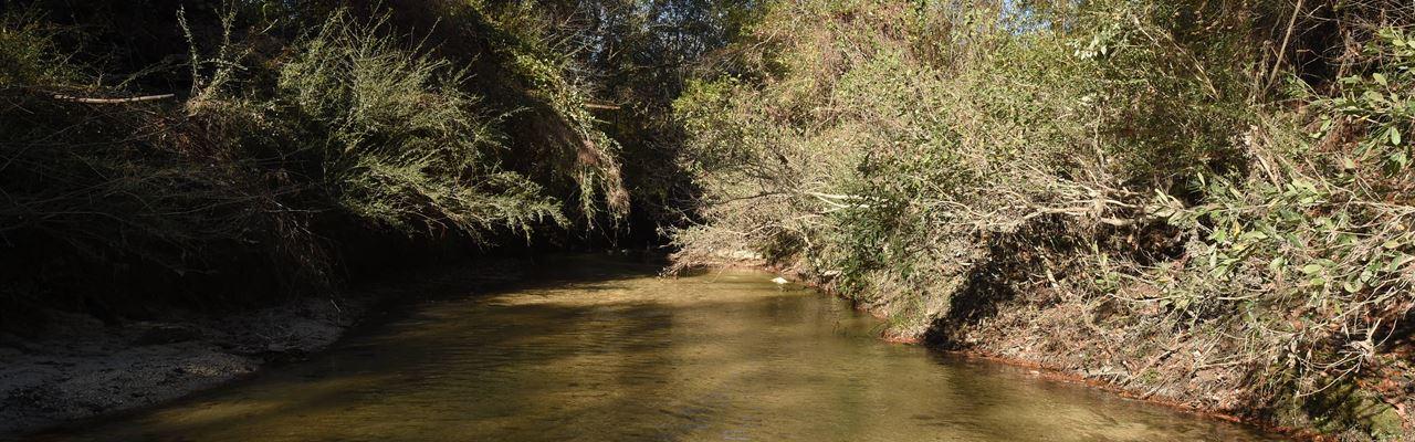 Styx River Tract : Robertsdale : Baldwin County : Alabama