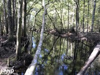 Ruffin Recreational w/ Swamp & Mini : Ruffin : Colleton County : South Carolina