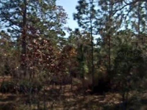 Putnam County, Fl $100,000 Neg : Hawthorne : Putnam County : Florida
