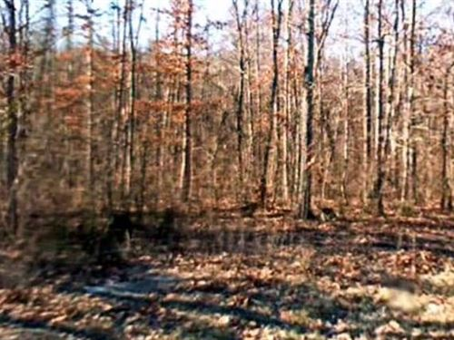Bledsoe County, Tn $35,000 Neg : Pikeville : Bledsoe County : Tennessee