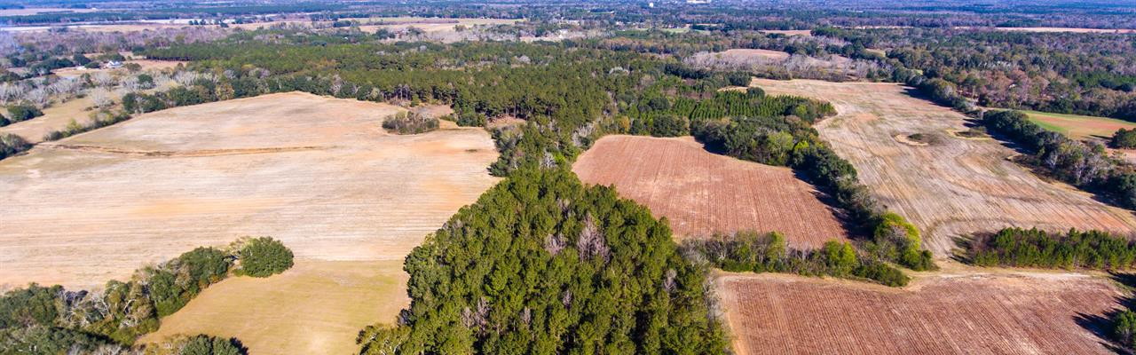 New Price Farm Timber Hunting : Blakely : Early County : Georgia