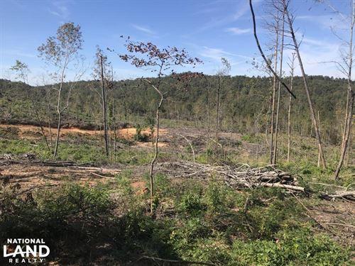 Tuscaloosa County Future Timber Tra : Moundville : Tuscaloosa County : Alabama