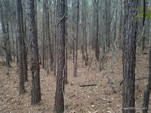 8 Ac - Wooded Home Site : Homer : Claiborne Parish : Louisiana