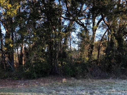 8.82 Acres Zoned Multifamily 778433 : Chiefland : Levy County : Florida