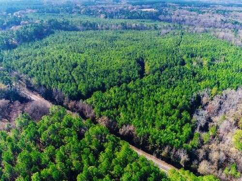 Beautiful Upland Hardwoods : Winnsboro : Fairfield County : South Carolina