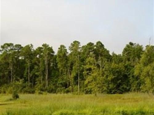 Sc Conservation Easement Acreage : Marion : South Carolina