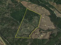 135 Acres in Woodward, SC : Woodward : Fairfield County : South Carolina