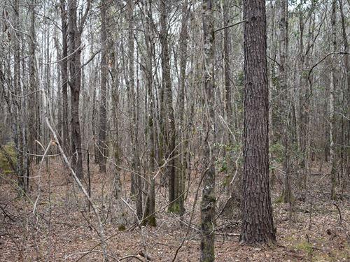 66-082S Buckhorn Creek South Tract : Coy : Wilcox County : Alabama