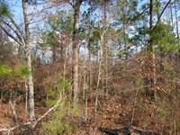 28 Acres And 57 Acres Wooded, Creek : Mauk : Taylor County : Georgia