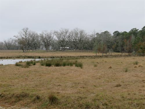 Great Irrigated And Pasture Farm : Whigam : Grady County : Georgia
