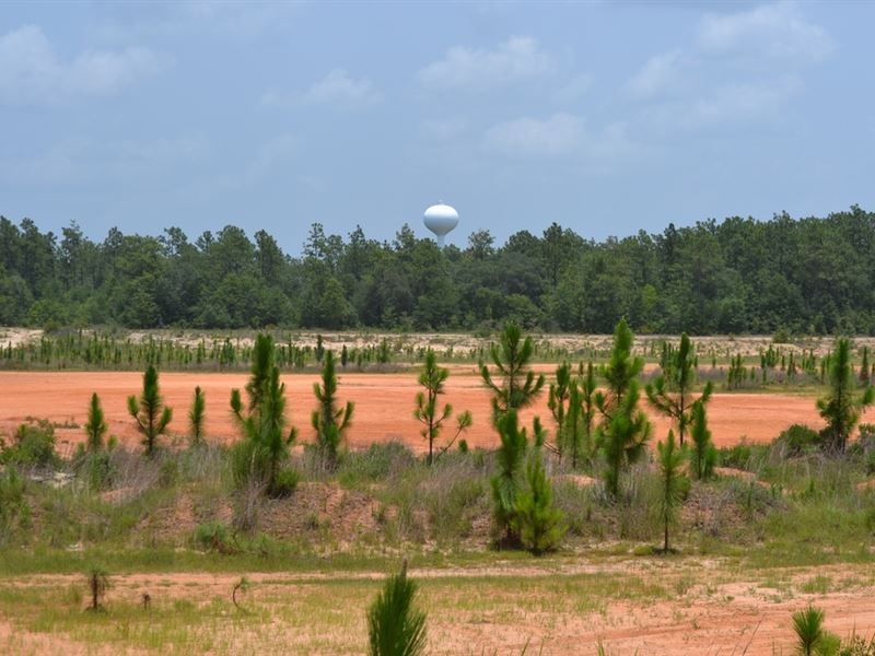 221 Ac Subdividable Commercial Land : Milton : Santa Rosa County : Florida