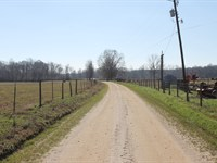 205+/- Acres Creekside Farm : Bowdon : Carroll County : Georgia