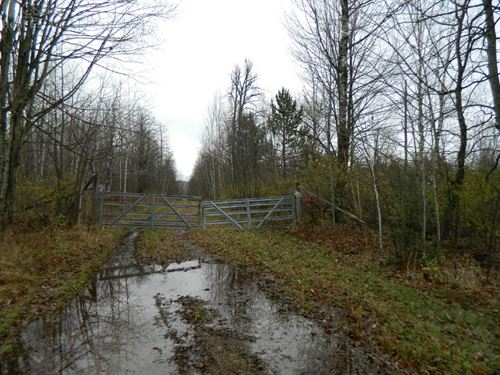 Vacant Land On Dead End Road : Ojibwa : Sawyer County : Wisconsin