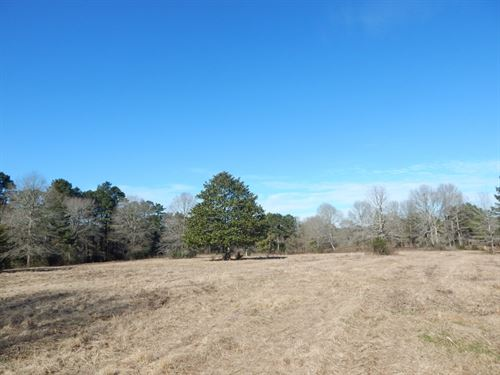 65 Acres Of Pastureland In Pike Cou : McComb : Pike County : Mississippi