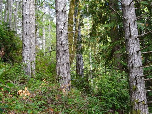 Jorstead Creek Rd : Lilliwaup : Mason County : Washington