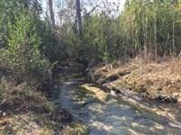 Hill Creek : Wagram : Scotland County : North Carolina