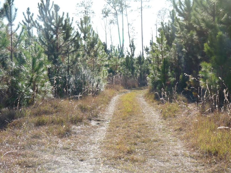 102 Acres in Newington, GA : Newington : Screven County : Georgia