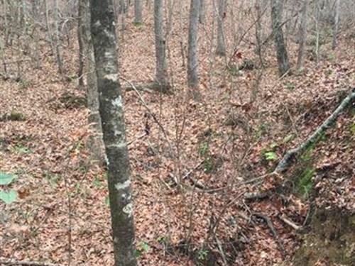 Big Timber, Bucks And Ducks : Warm Springs : Meriwether County : Georgia