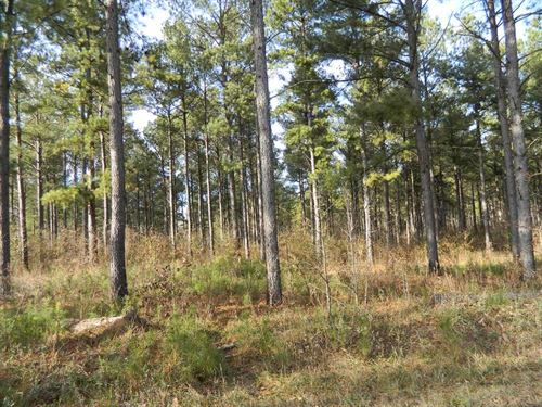 41.66 Acres Of Mature Planted Pine : Carlton : Oglethorpe County : Georgia