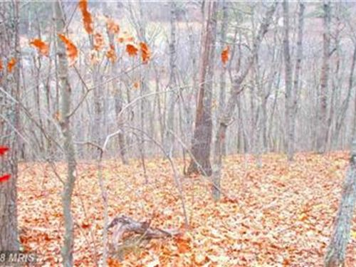 All Wooded Lot : Burlington : Mineral County : West Virginia
