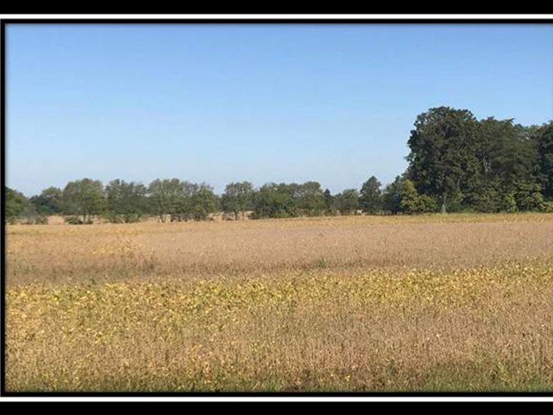 Lone Hickory : Hilliard : Franklin County : Ohio