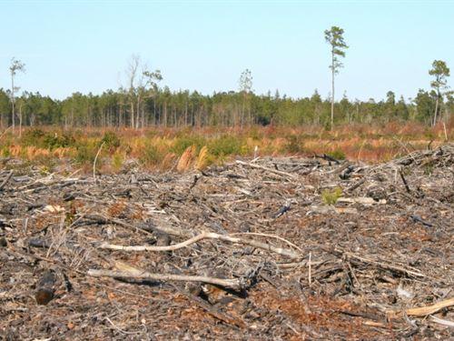 Pendergrass : Harrells : Sampson County : North Carolina
