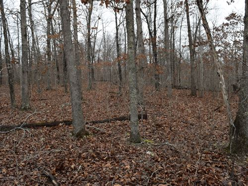 70 Acres - Wild And Wonderful : Bunker : Dent County : Missouri