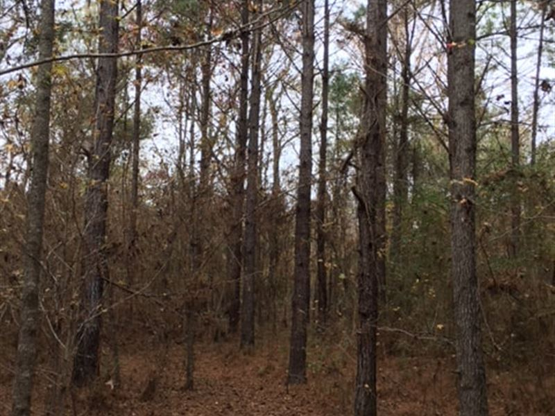 Timber Tract With Prime Farm Soils : Bastrop : Morehouse Parish : Louisiana