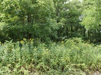1.59 Acres, Owner Finance Available : Max Meadows : Wythe County : Virginia