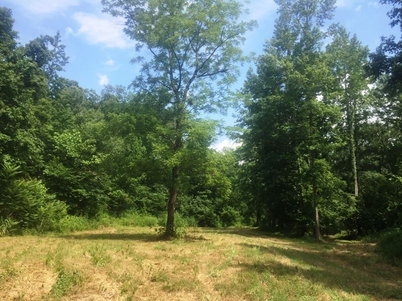 Alley Branch Tract - Tract 1601 : Parsons : Decatur County : Tennessee