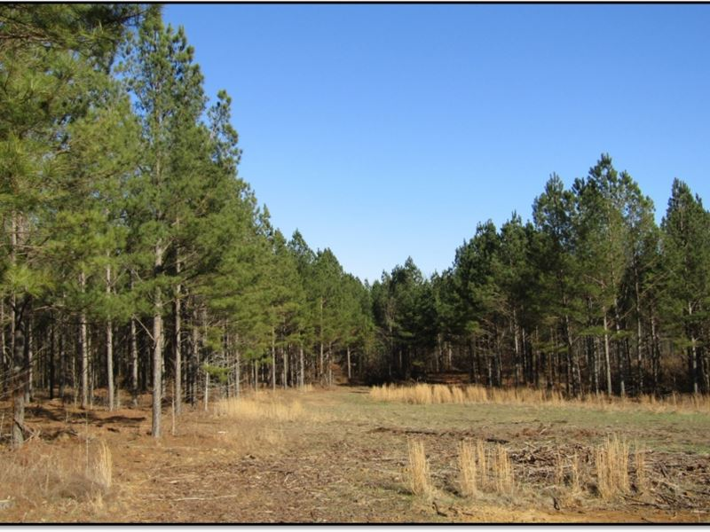 154 Acres In Panola County In Como : Como : Panola County : Mississippi