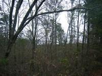 23.49 Beautiful Acres In Greensboro : Greensboro : Greene County : Georgia